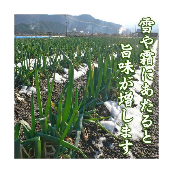 岩津ねぎ 送料無料 朝来特産 訳あり 4kg|arumama|02