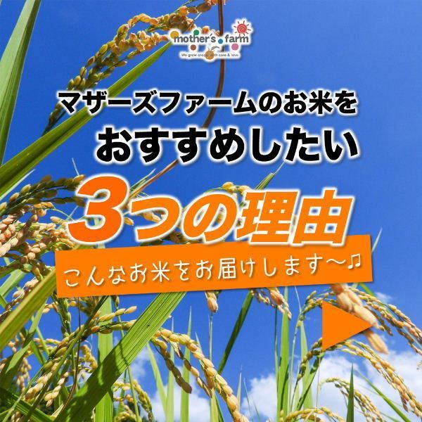 【新米】定期購入 10kgx6回 令和元年産 玄米 白米 今ずり米 無洗米 農薬不使用 コシヒカリ|arumama|04