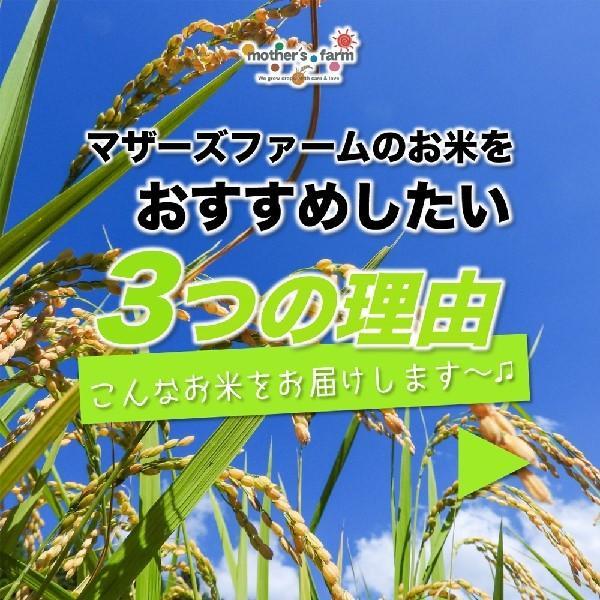 【新米】【定期購入】 2kgx12回 令和元年産 玄米 白米 今ずり米 無洗米 減農薬・特別栽培米 コシヒカリ arumama 04