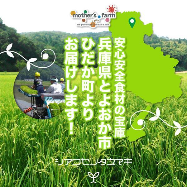 【シアワセノタネマキ】地元生産農家も使う、安心安全のもみがら・もみ殻・籾殻 5kg【送料無料】|arumama|05