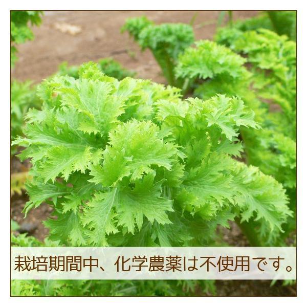 野菜セット 詰め合わせ お試し 農薬不使用 訳あり 不揃い 送料無料|arumama|03