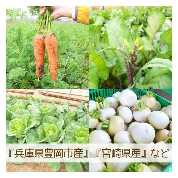 野菜セット 詰め合わせ お試し 農薬不使用 訳あり 不揃い 送料無料|arumama|04