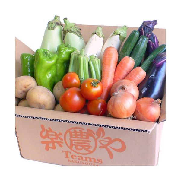野菜 詰め合わせ 納得セット 農薬不使用 訳あり 不揃い 送料無料|arumama|06