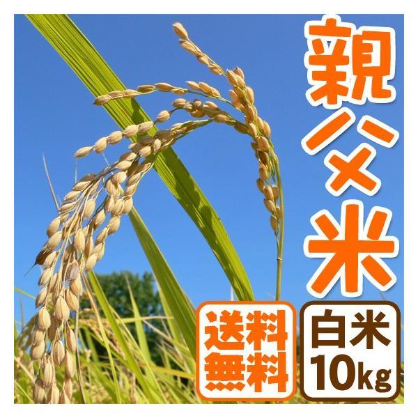 ホワイトデー コシヒカリ 10kg 白米 親父米 兵庫県産 平成29年産 送料無料|arumama