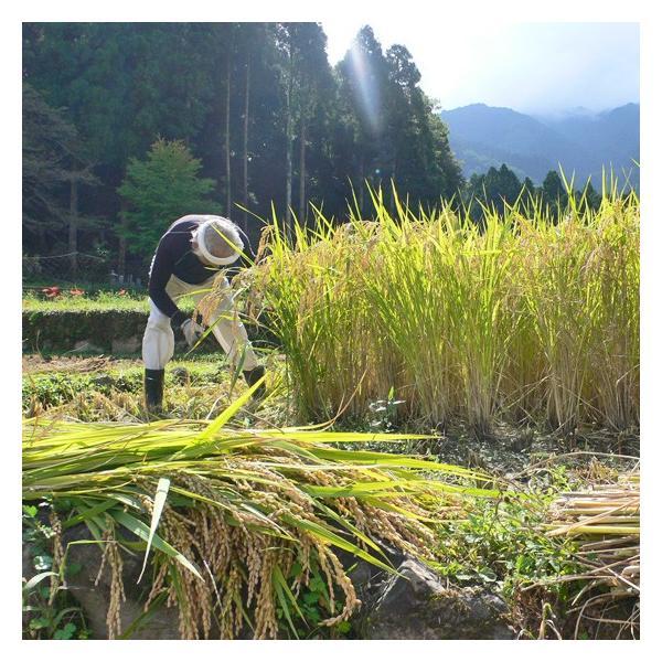 ホワイトデー コシヒカリ 10kg 白米 親父米 兵庫県産 平成29年産 送料無料|arumama|04