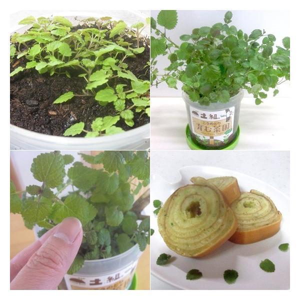 こうのとり育む菜園 プチ菜園 家庭菜園 腐葉土 お試しセット レモンバーム|arumama|04
