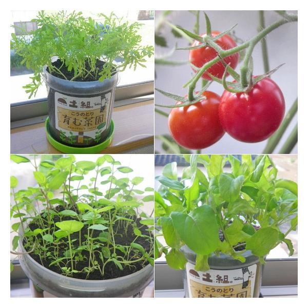 こうのとり育む菜園 プチ菜園 家庭菜園 腐葉土 お試しセット 種なし|arumama|04