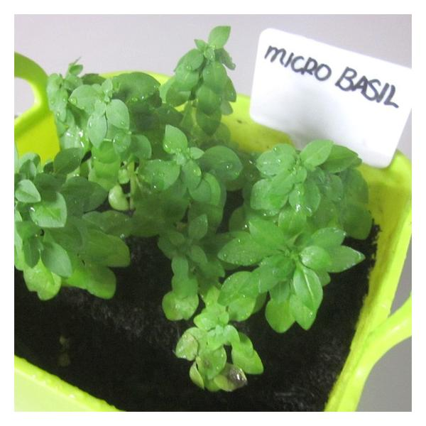 腐葉土 有機100% 家庭菜園 ガーデニング 1.2L×2袋 送料無料|arumama|06