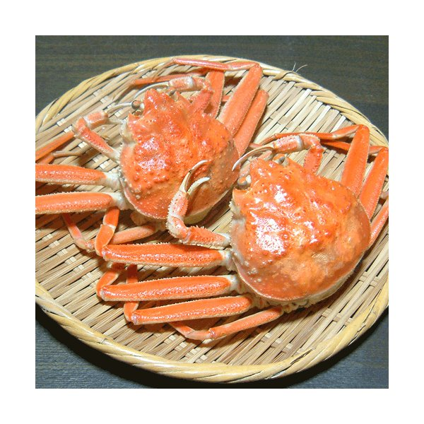 せこがに せいこがに せいこ蟹 セコ蟹(大)10杯 カニ かに 蟹 兵庫県 香住・柴山産 送料無料|arumama|05