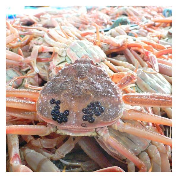 セコガニ せいこ蟹 せいこがに セコ蟹(大)カニ かに 蟹 香住・柴山産|arumama|03
