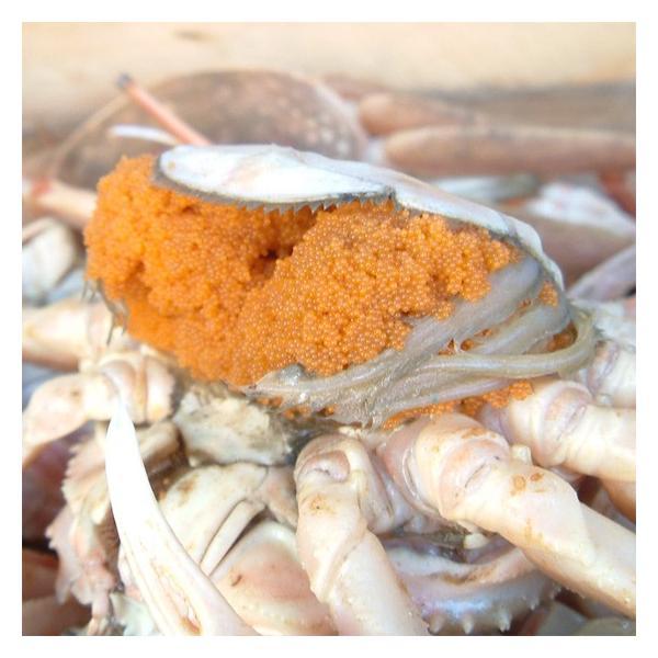 セコガニ せいこ蟹 せいこがに セコ蟹(大)カニ かに 蟹 香住・柴山産|arumama|04