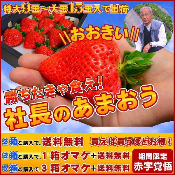 2箱以上で送料無料 特大の苺 いちごの王様 あまおうイチゴ 勝ちたきゃ食え!「社長のあまおう特大9から15玉入」
