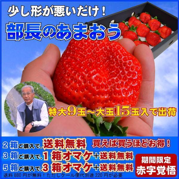 2箱以上で送料無料 訳あり 部長のあまおう 特大の苺 いちごの王様 あまおうイチゴ 上を狙え! 特大9から15玉入 少し形が悪いだけ