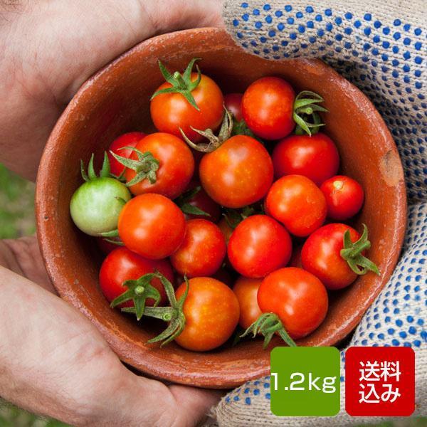 フルーツトマト 1.2kg 幸せ農園のミニトマト トマト 高糖度 九州産 お歳暮 ギフト