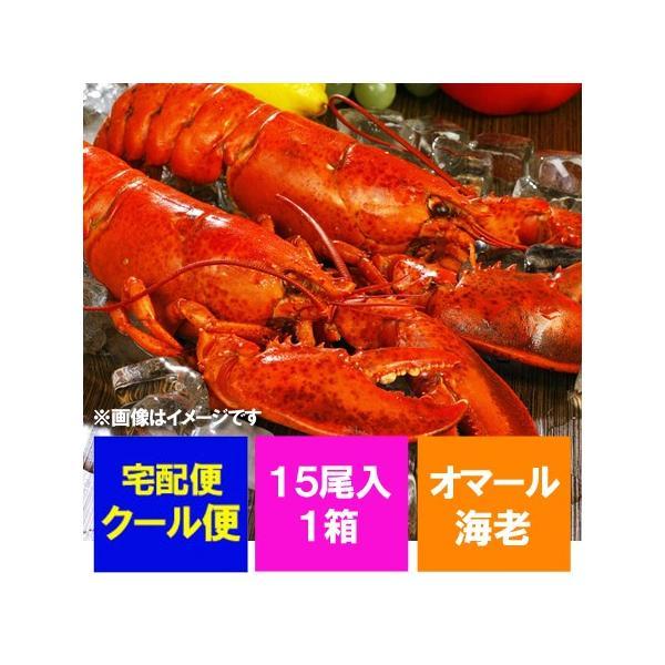 オマール海老 冷凍 ロブスター ボイル オマールエビ 15尾入り 1箱 価格 18000円 海老/えび/エビ|asahikawajyogai