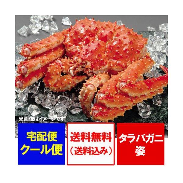 タラバガニ 姿 送料無料 たらば蟹 姿 たらばがに 浜ゆで たらば蟹 姿 一匹 約2.5kg 価格 27800円 北海道産 タラバガニ ボイル かに 浜ゆで