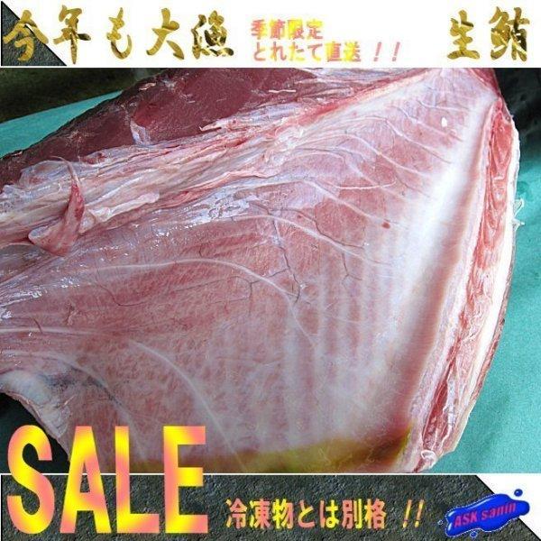 (予約販売6月上旬発送)生本鮪腹身1枚6kg位 大トロ・中トロたっぷり!! まぐろ マグロ