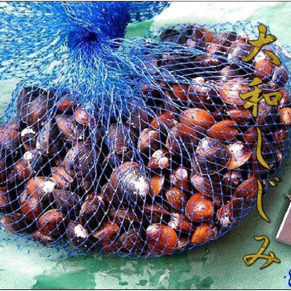 超有名!!宍道湖の七珍味「ヤマトしじみ中5kg」 しじみ シジミ 蜆