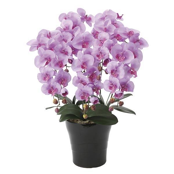 胡蝶蘭 光触媒 観葉植物 フラワー コチョウラン 紫 パープル 造花 枯れない 消臭 母の日 蘭 花