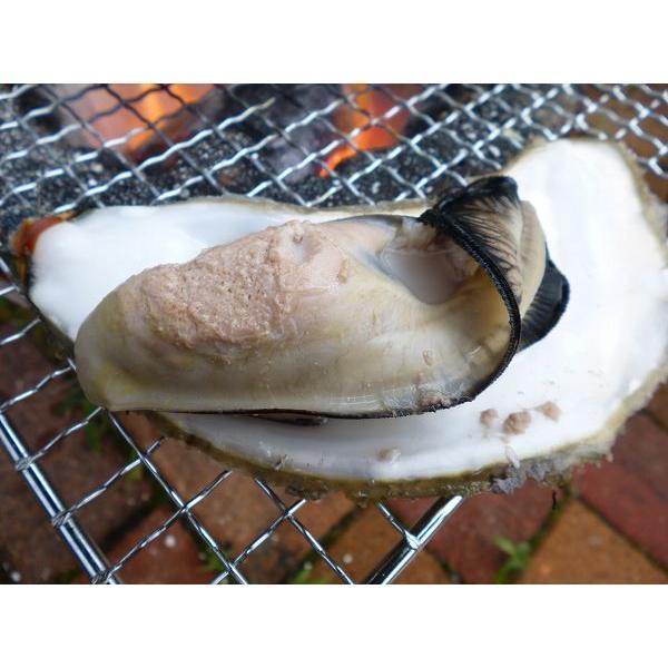 レア/3年物 特大4L 10個/北海道・活牡蠣(カキ)(殻付き 生食)牡蠣・厚岸西岸 仙鳳趾/牡蛎 殿牡蠣|atumaru-suisan|06