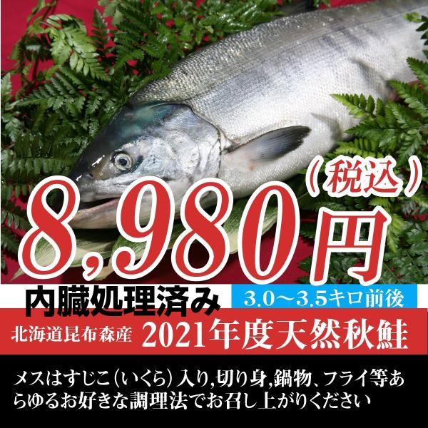 訳あり(特選)北海道(鮭)生 秋鮭 メス 生筋子 3.0キロ~3.5キロ 内臓処理