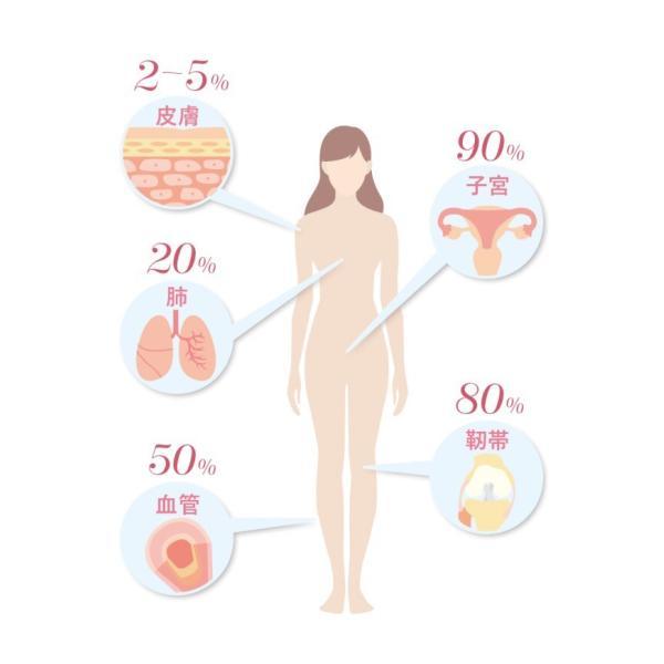 高純度エラスチンカプセル サプリメント100粒 季令キレイKIREI化粧品 サロン専売品|aurorastore|05