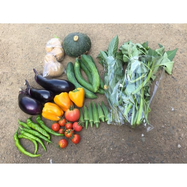 無農薬野菜セット M(8〜10品)|ayazen-h|02