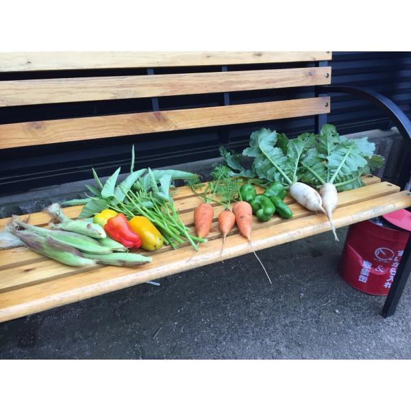 無農薬野菜セット M(8〜10品)|ayazen-h|03