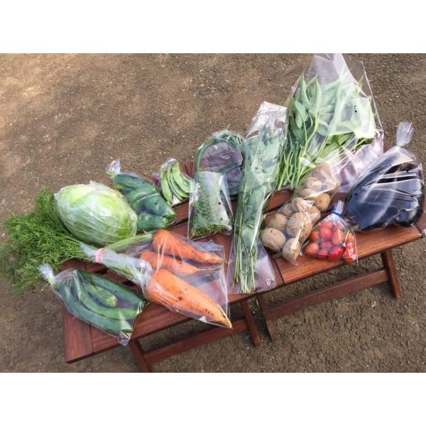 無農薬野菜セット M(8〜10品)|ayazen-h|04
