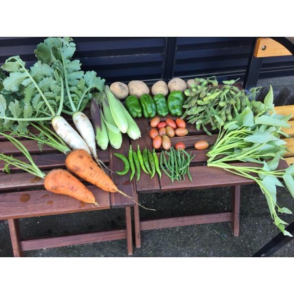 無農薬野菜セット M(8〜10品)|ayazen-h|05