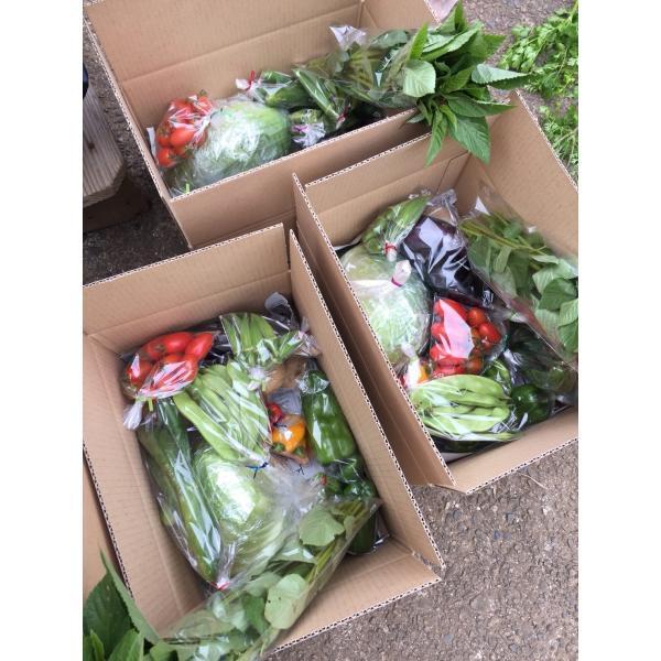 無農薬野菜セット M(8〜10品)|ayazen-h|06