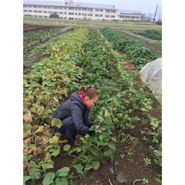 無農薬野菜セット M(8〜10品)|ayazen-h|07
