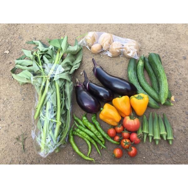 無農薬野菜セット S(4~6品)|ayazen-h|02