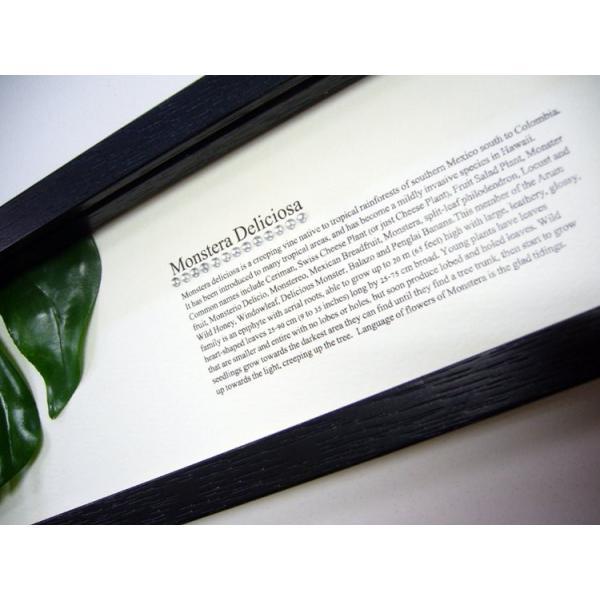 リーフパネル 絵画/ゆうパケット ハディアフータン モンステラ1(ブラック)/絵画 壁掛け 壁飾り インテリア 花 アートパネル 絵 額入り リビング 玄関 ayuwara 04