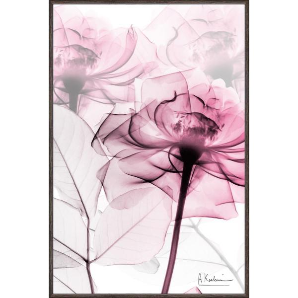 レントゲンアート X RAY キャンバスアート「ピンクローズ(Sサイズ)」 インテリア 額入り ポスター モノトーン アートパネル リビング 玄関 プレゼント バラ|ayuwara