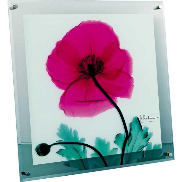レントゲンアート X RAY ガラス アート「ポピー マルサーラ(Mサイズ)」/絵画 壁掛け 壁飾り インテリア ayuwara