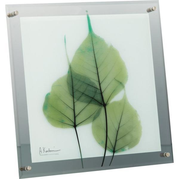 【レントゲンアート】X RAY ガラス アート「グリーン ユーカリ(Lサイズ)」|ayuwara