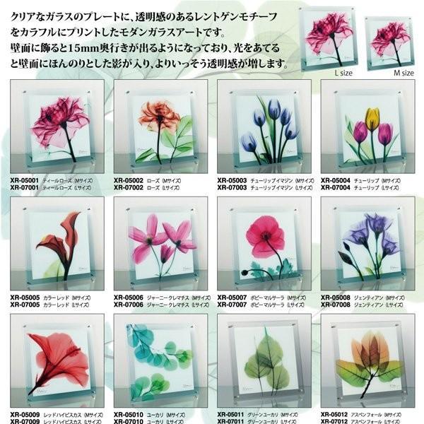 【レントゲンアート】X RAY ガラス アート「グリーン ユーカリ(Lサイズ)」|ayuwara|02