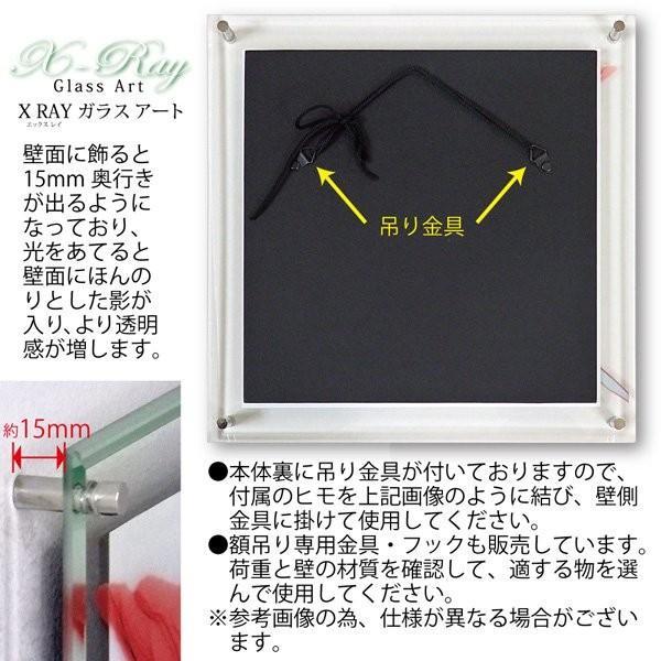 【レントゲンアート】X RAY ガラス アート「グリーン ユーカリ(Lサイズ)」|ayuwara|05