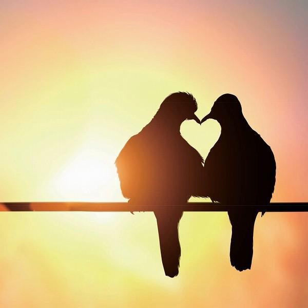 キャンバスパネル キャンバスアート ハートバード・鳥の愛 30x30cm/絵画 壁掛け 壁飾り インテリア 油絵 花 アートパネル ポスター 絵 ayuwara