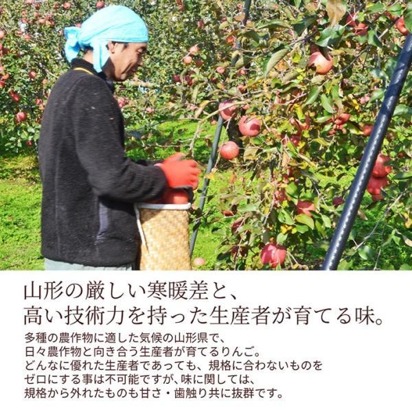 りんご 訳あり 10kg 果物 ふじ 送料無料 山形県産 産地直送 リンゴ サンふじ ご家庭用|azimiya|05