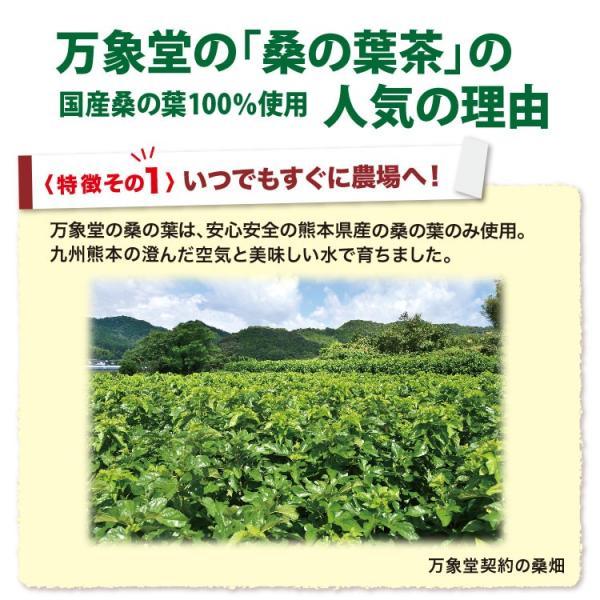 桑の葉茶 粉末 100g 青汁 国産 (熊本県産) 効能 桑茶 パウダー|bansyodo1|08