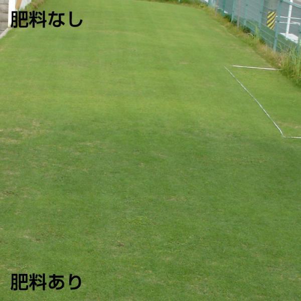 芝生 肥料 バロネス 芝生の肥料 5kg入り 緩効性化成肥料 細粒タイプ|baroness|04