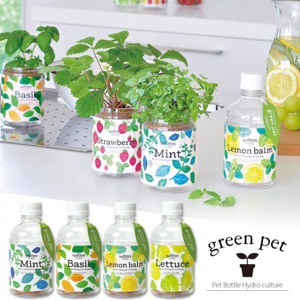 土を使わない水耕栽培セット 育てるグリーンペット ハーブ レタス 選べる4種類 ミント バジル レモンバーム