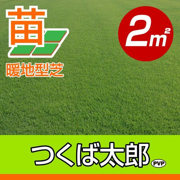 【10月9日〜のお届け】産地直送 つくば産 つくば太郎 野芝 登録品種 張り芝用 2平米 0.6坪分 芝生 暖地型 天然芝 園芸