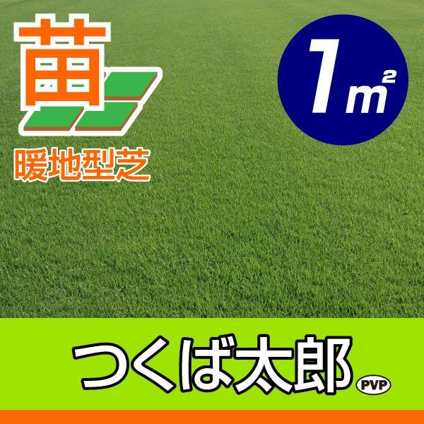 【10月9日〜のお届け】産地直送 つくば産 つくば太郎 野芝 登録品種 張り芝用 1平米 0.3坪分 芝生 暖地型 天然芝 園芸
