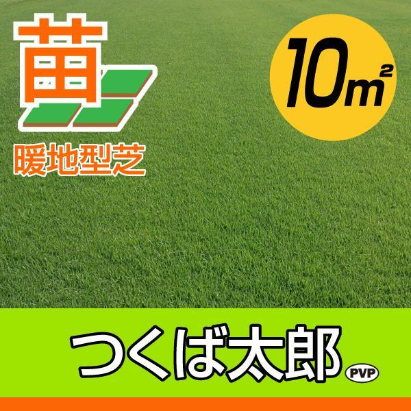 【10月9日〜のお届け】産地直送 つくば産 つくば太郎 野芝 登録品種 張り芝用 10平米 3坪分 芝生 暖地型 天然芝 園芸