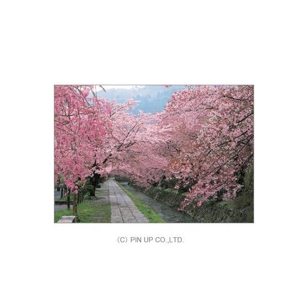 ポストカード【風景】京都 哲学の道の桜(pin-KM38)