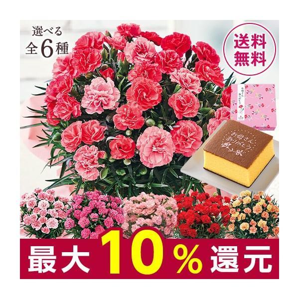 母の日 プレゼント ギフト スイーツ セット 2020 お花 花 送料無料 花鉢 カーネーション さくらもなか カステラ 5号