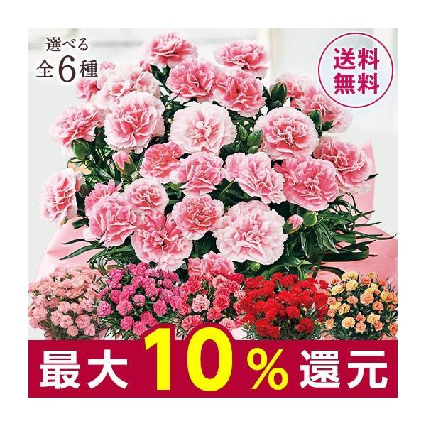 母の日 プレゼント ギフト 2020 お花 花 送料無料 花鉢 母の日期間お届け カーネーション パティシエール 5号